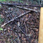 thumbnail of Garten4